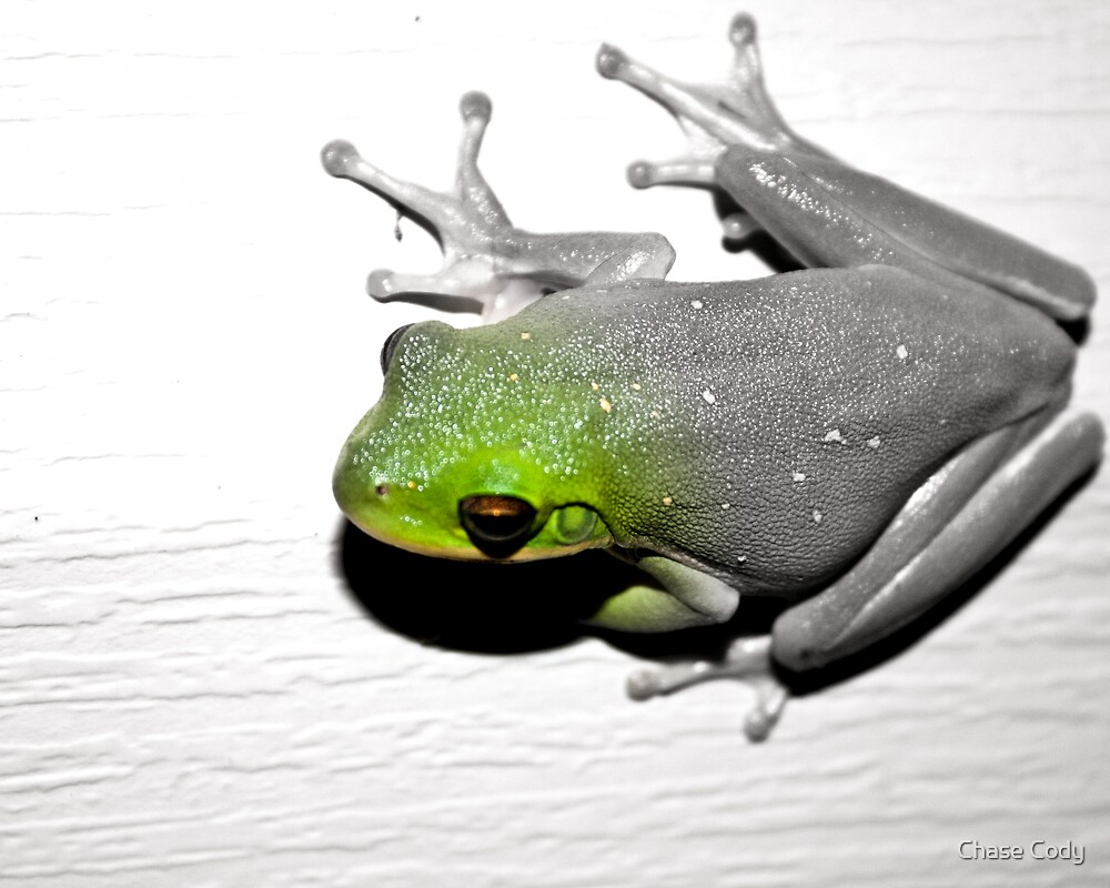 Frog -Remixed- by Chase Cody