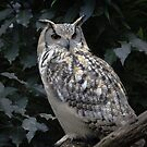 ...a wise old Owl ..... by John44
