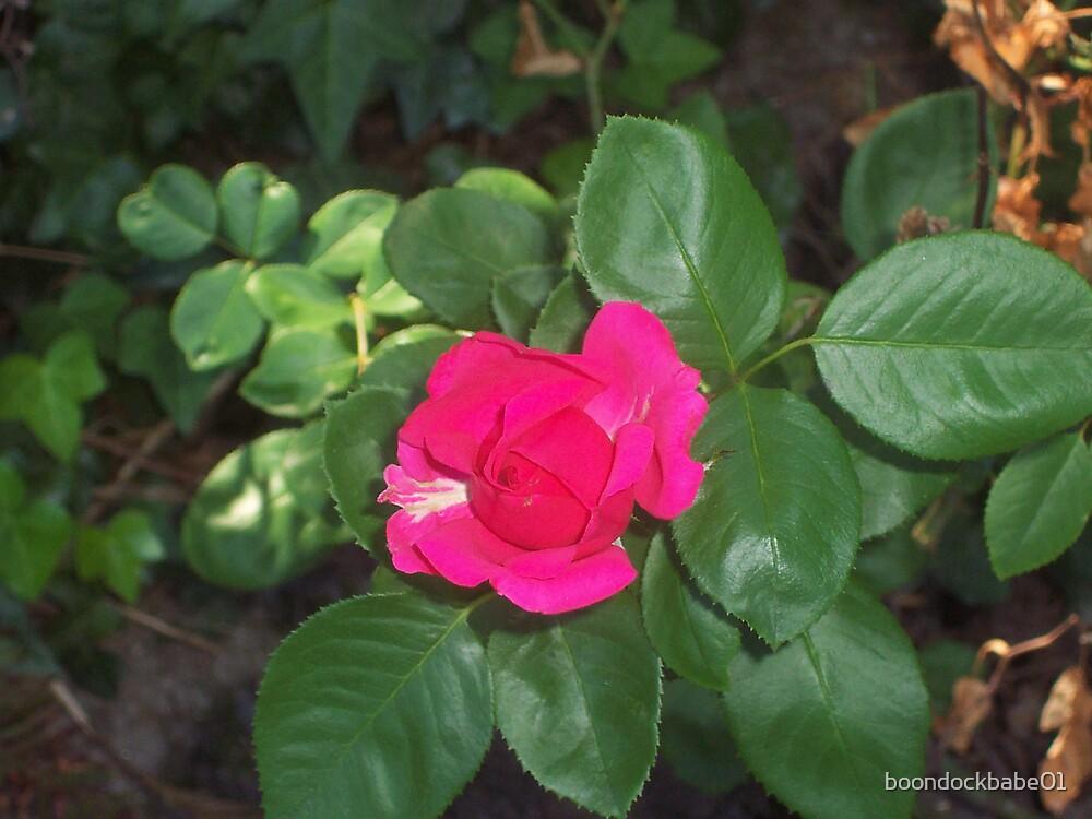 wild pink by boondockbabe01