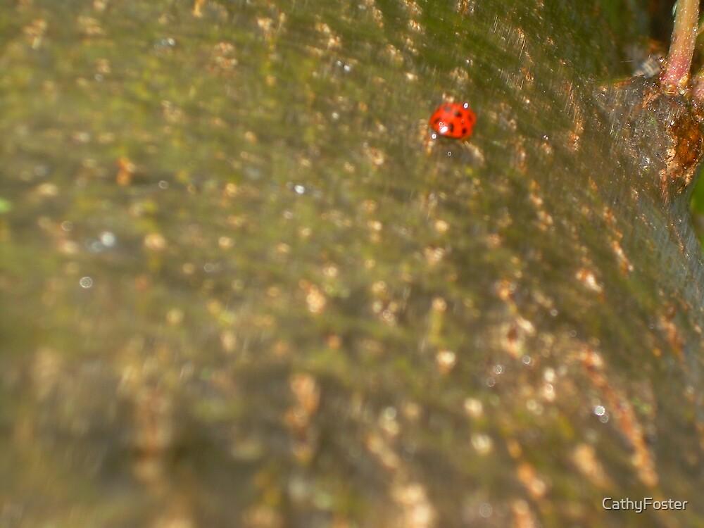 laddy bug in rain by CathyFoster
