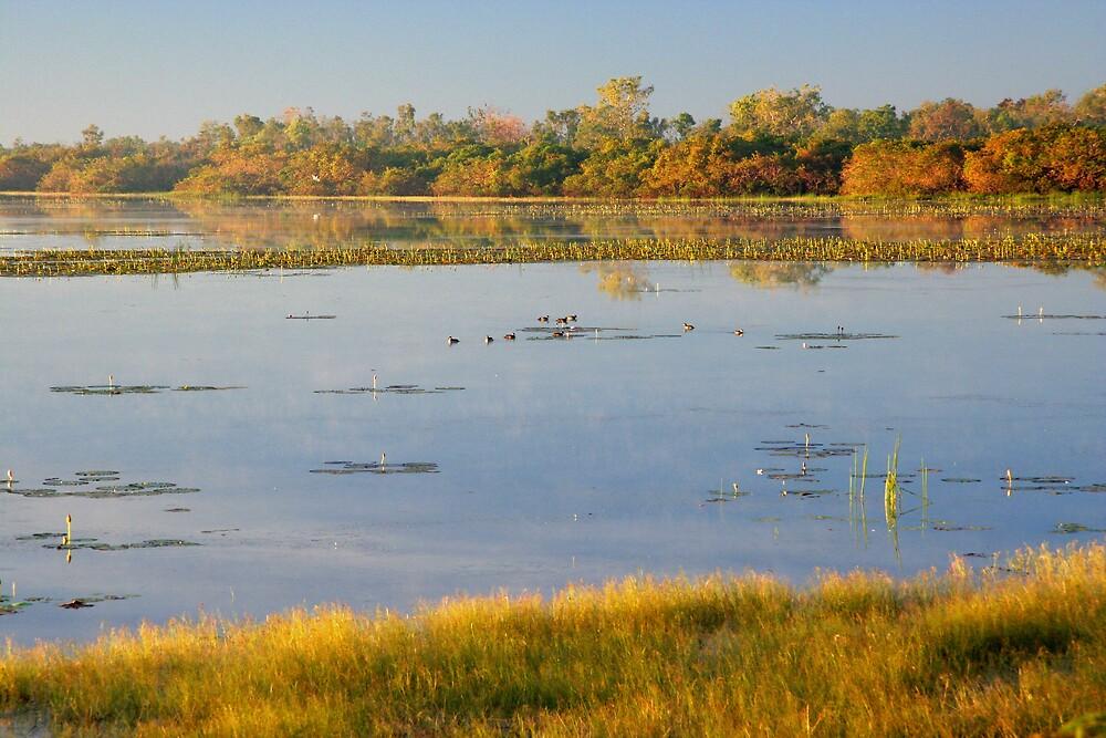 Dawn at Mamukala Wetlands, Northern Territory by Martin Pot