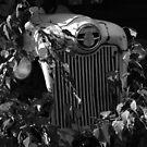 Old Ford 800 by Sam Davis