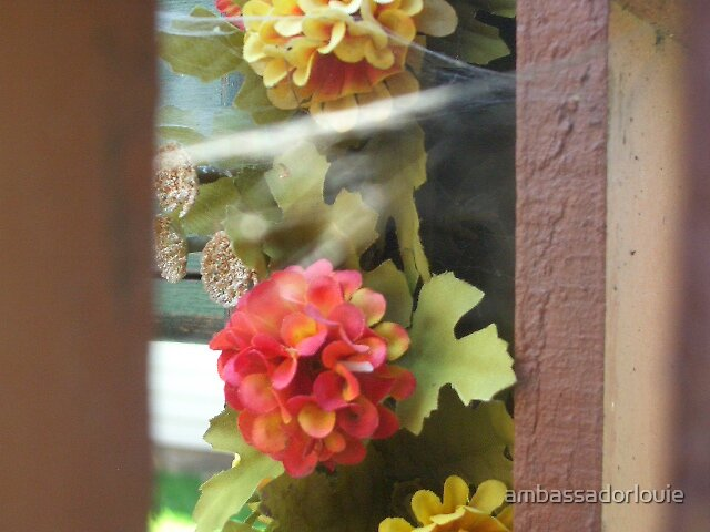 peek-a-boo by ambassadorlouie