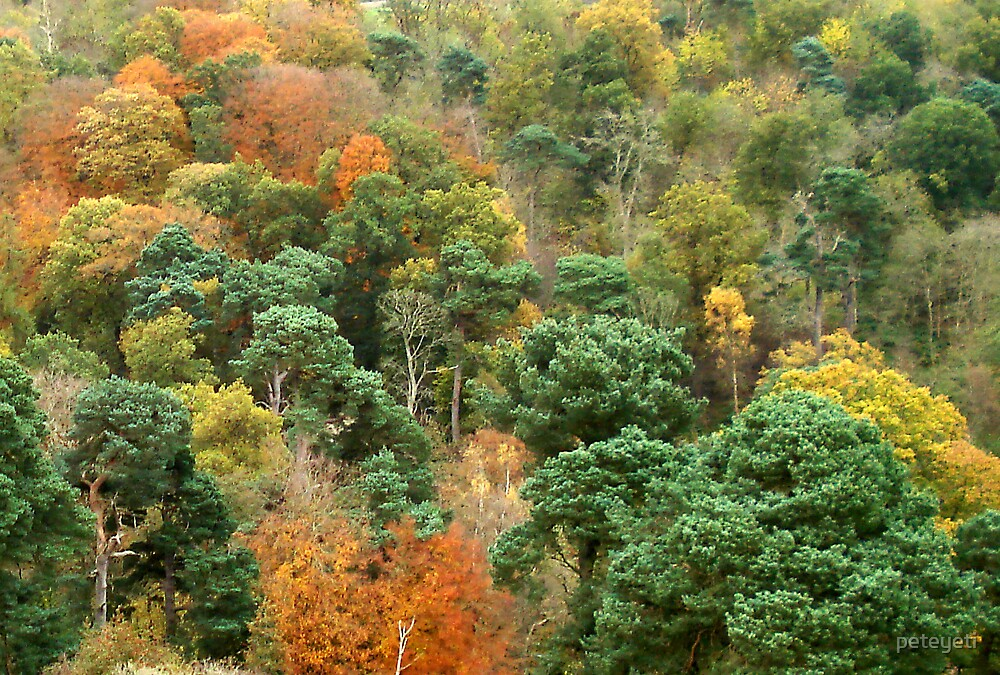 Autumn at Roslyn by peteyeti