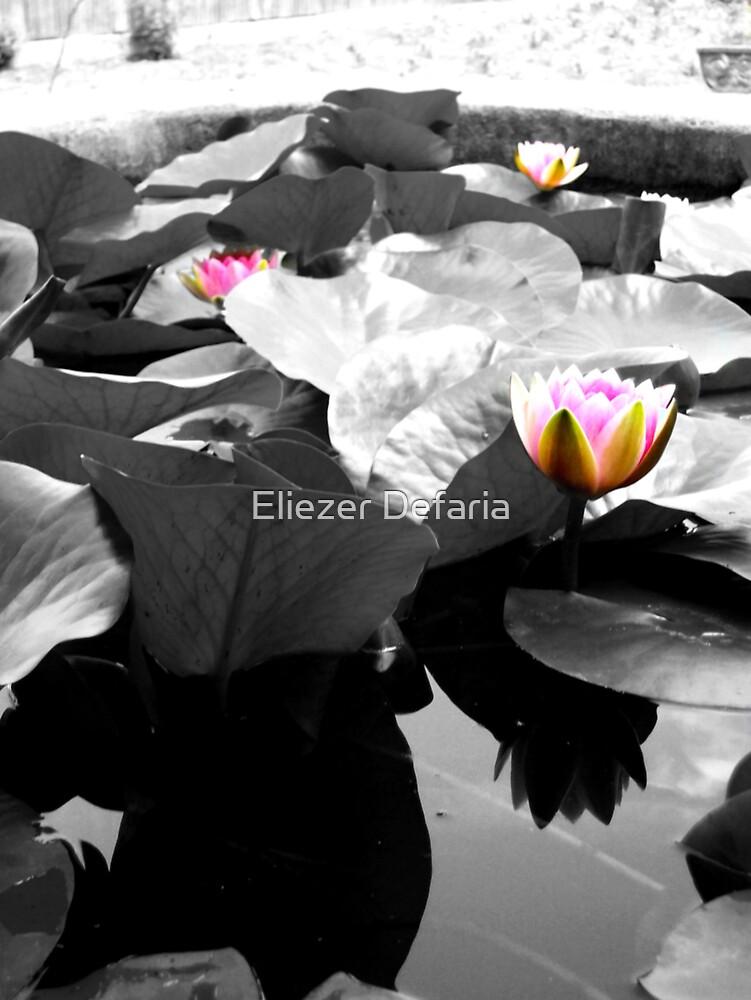 untitled by Eliezer Defaria