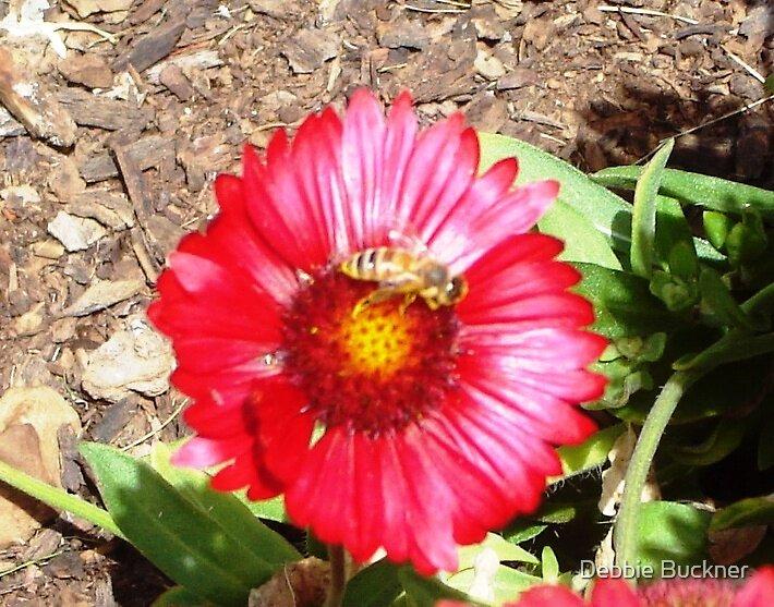 Bee + Flower by Debbie Buckner