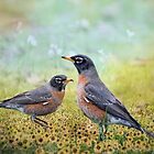 Robins, Heralds of Spring by Bonnie T.  Barry