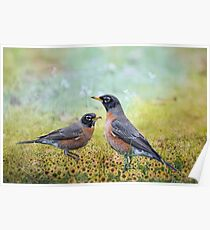 Robins, Heralds of Spring Poster