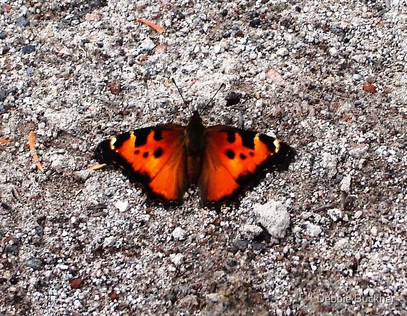 Gravel Butterfly by Debbie Buckner