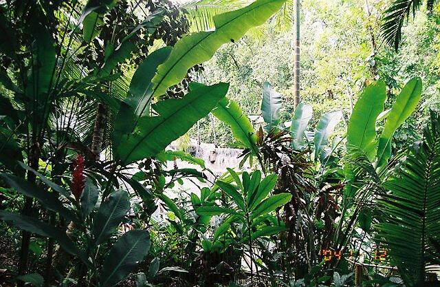 jungle by sillumgungfu