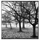Winter Light by Ed Sweetman