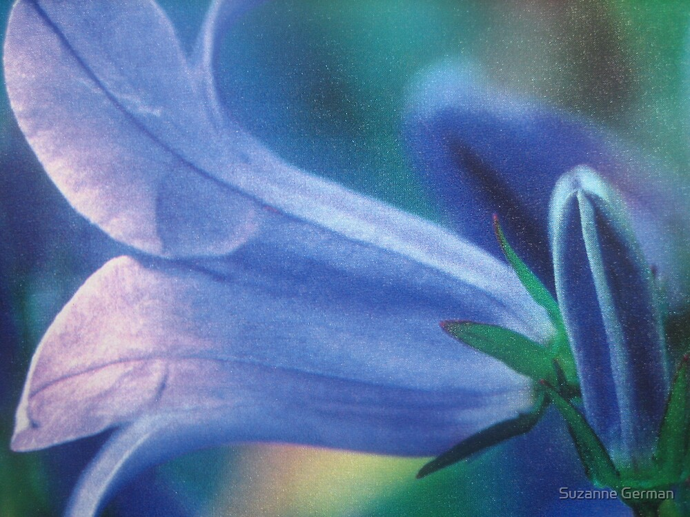 bluebell - wales by Suzanne German