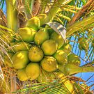 Coconuts on Tree by photorolandi