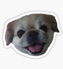 Lucy fur Real - pekingese dog Sticker