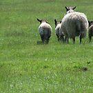 Bye sheep! by Andy Harris