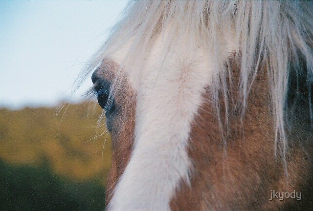 Horse - up close by jkyody