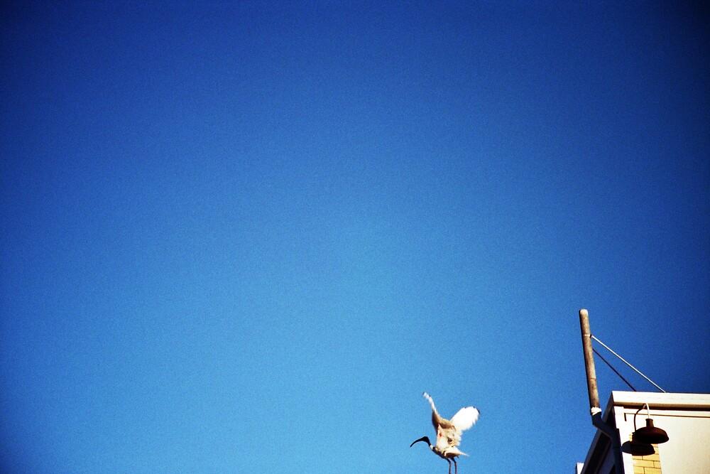 Freedom by scottwynn