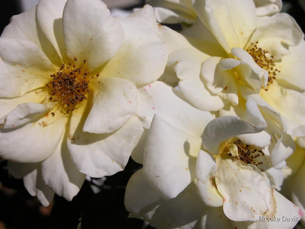 White Climbing Roses by Brooke Davis