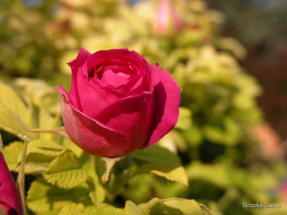Valentine's Day Rose by Brooke Davis