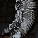 Turkey Vulture wings by carolcath