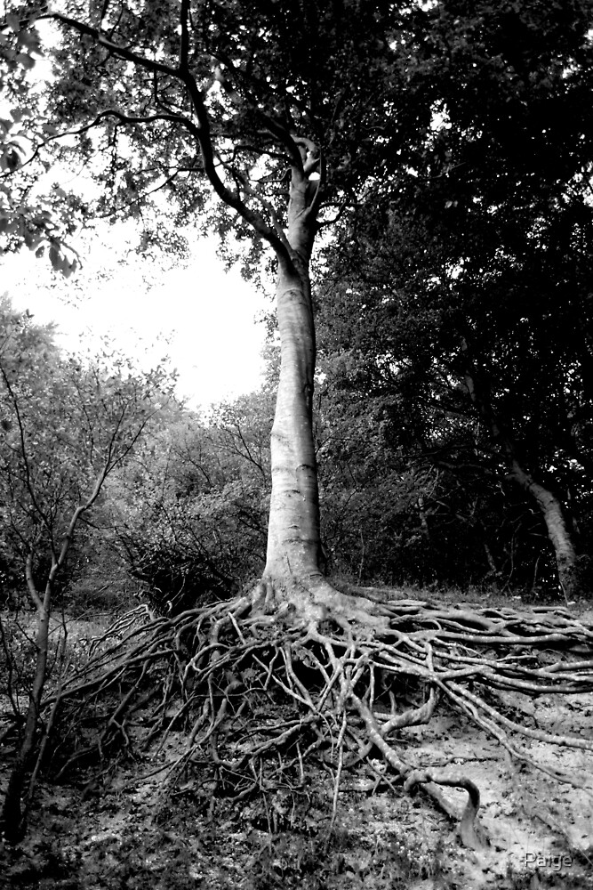 Roots by Paige