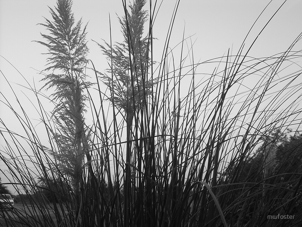 Evening grass by mwfoster