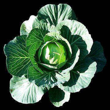 Cabbage Blossom by birdinsun