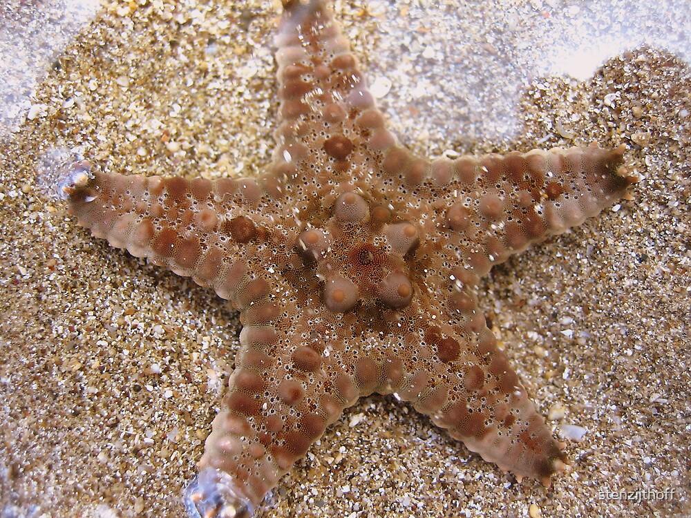 Starfish by stenzijthoff