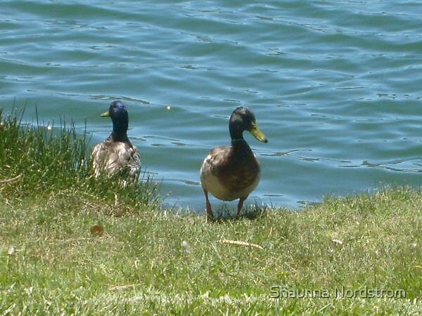 Ducks at the lake by Shaunna Nordstrom