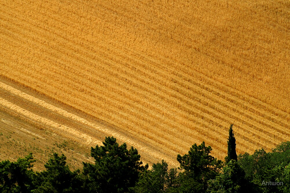 Assisi Countryside  by Antwon