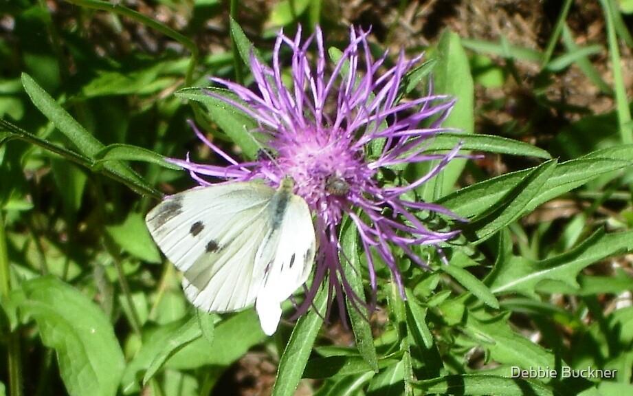 White Butterfly by Debbie Buckner