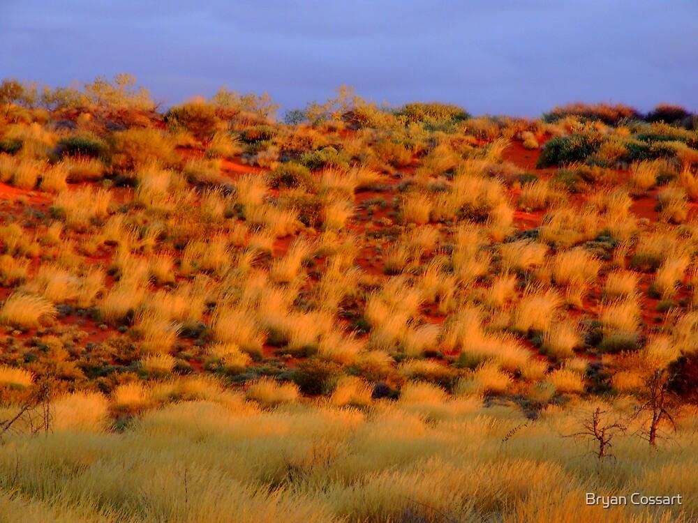 Desert Grasses by Bryan Cossart