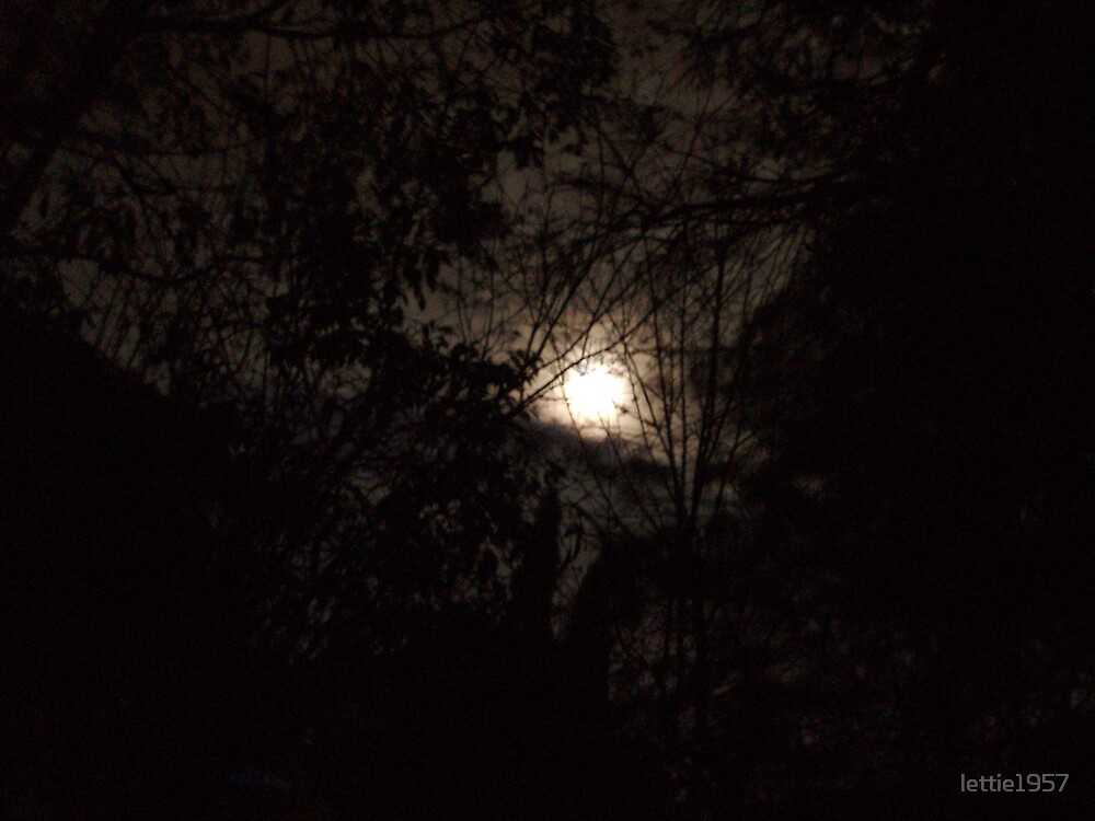 Moon  through the trees by lettie1957