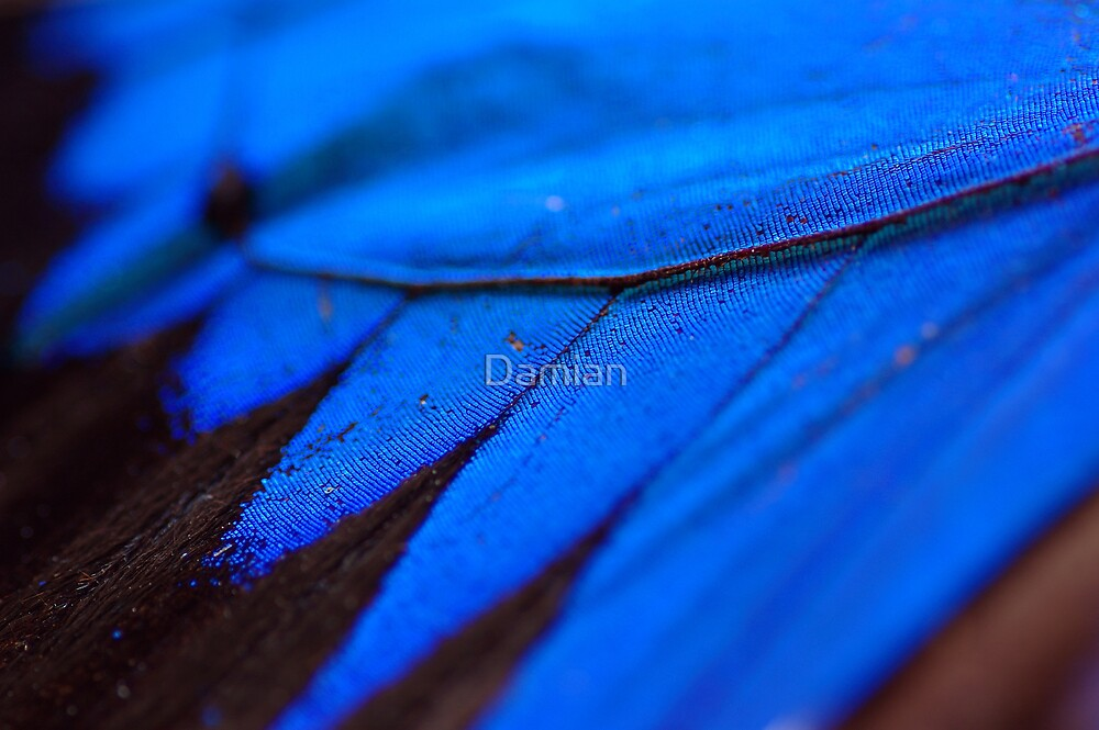 Shimmering Blue by Damian