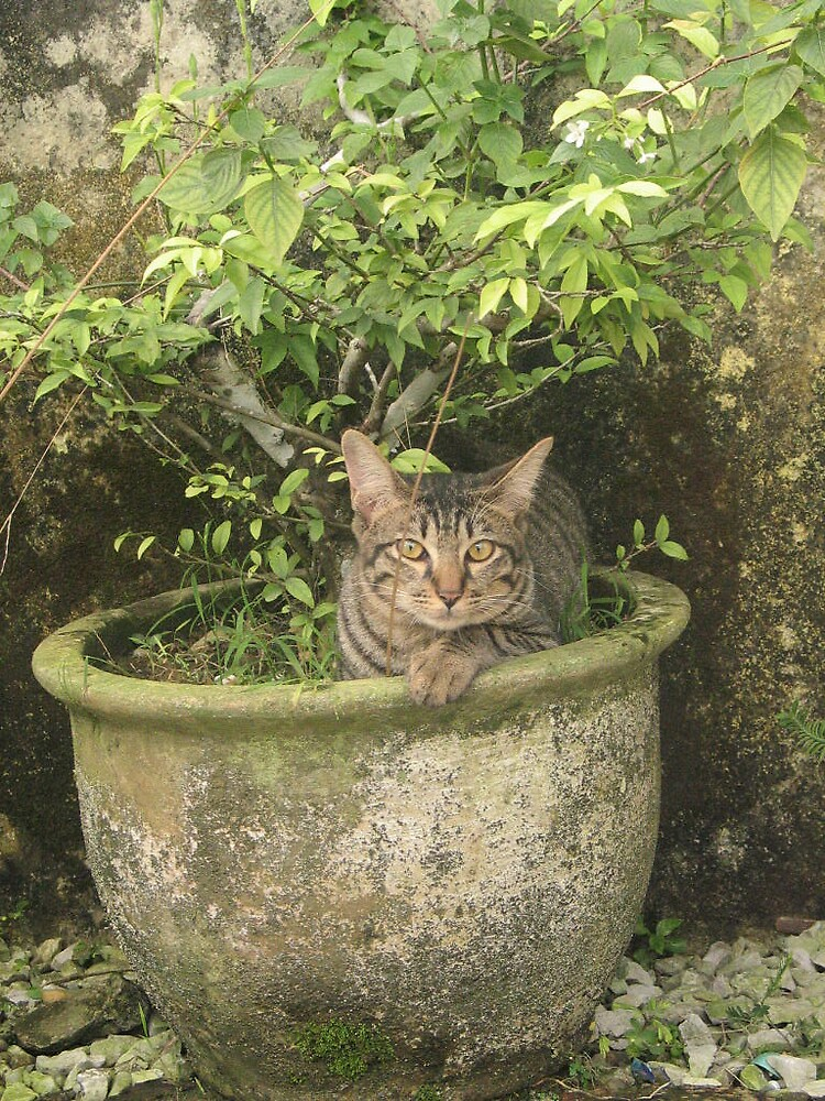 cat in a pasu by twosouls