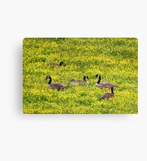 Springtime Gathering Canvas Print