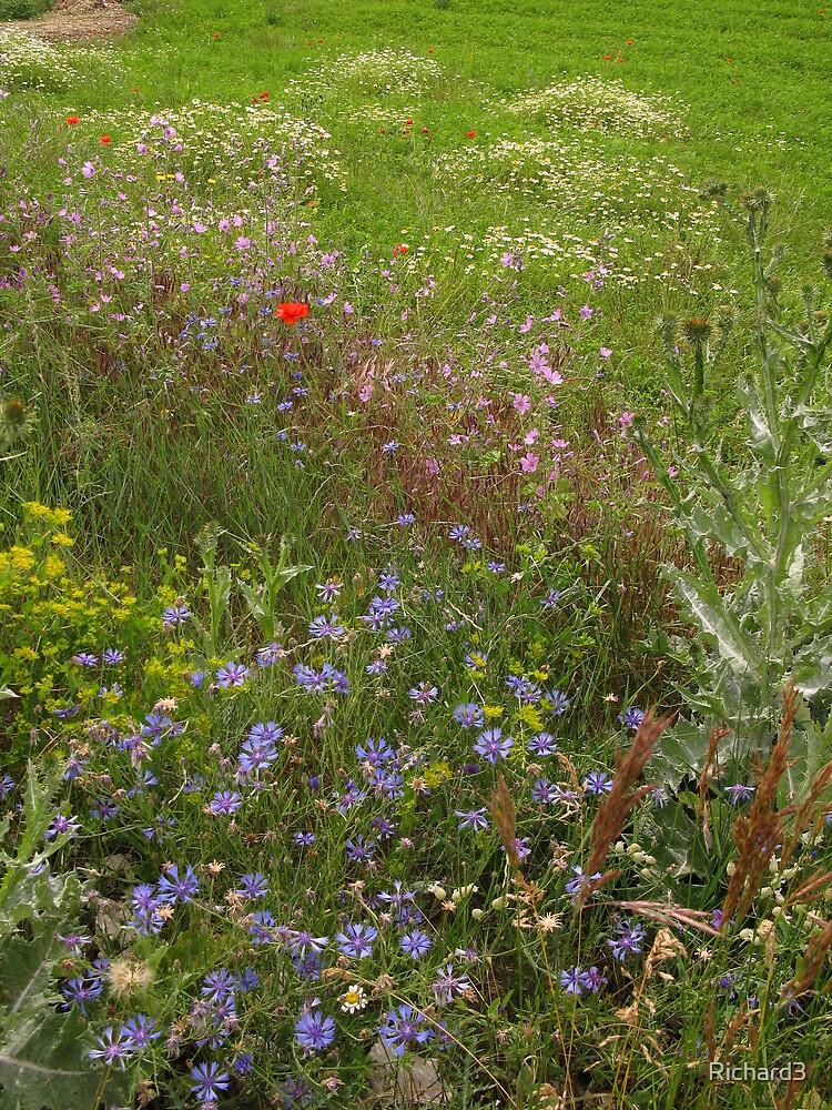 Boquet of wild flowers by Richard3
