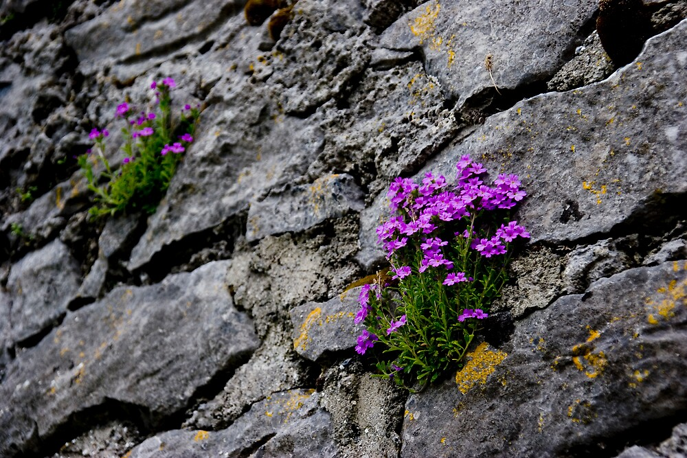 Flowers on Castle Wall, Ireland by ThomasMaher