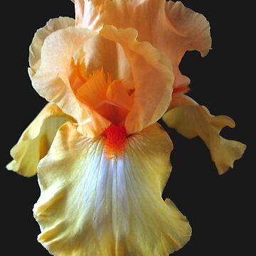 Shades of Orange by Jolie2044