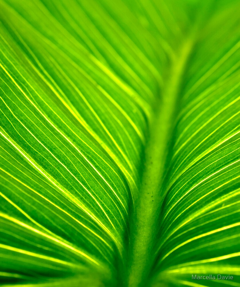 Leaf by Marcella Davie