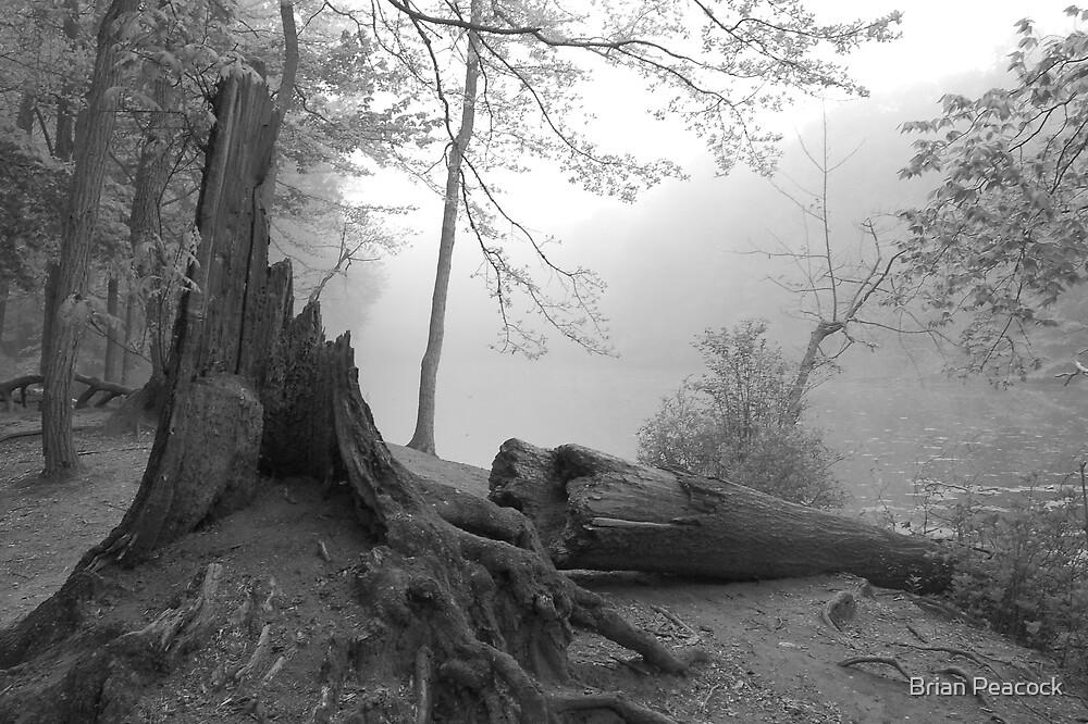 Fallen Tree by Brian Peacock