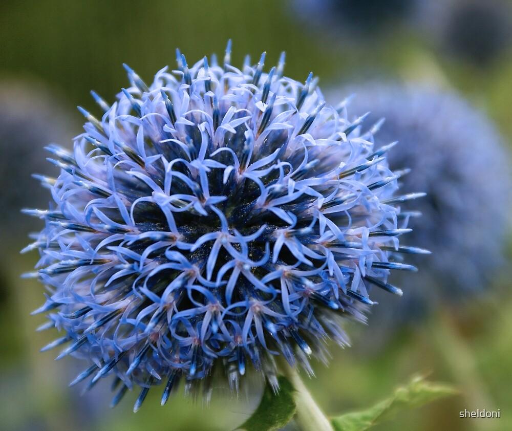 """""""BlueBurst"""" by sheldoni"""