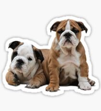 English Bulldogs Cute Dogs Animals Sticker