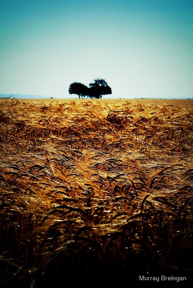 the Plain by Murray Breingan