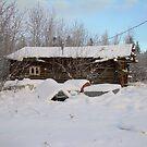 Old cabin in Beaver,Alaska by drewster
