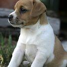 Proud Pup by Julie Just