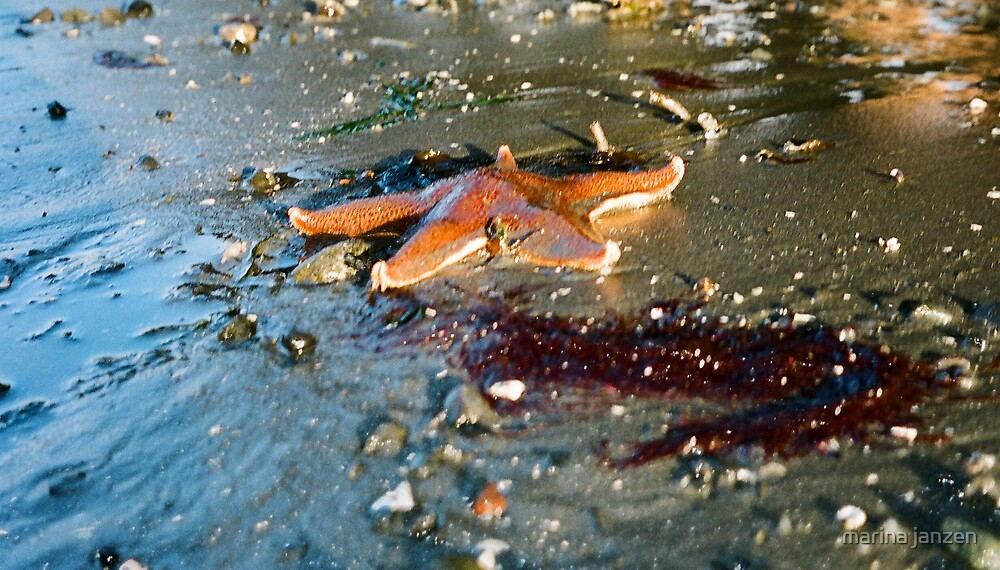 leather star by marina janzen