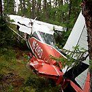 Good landing..... by drewster