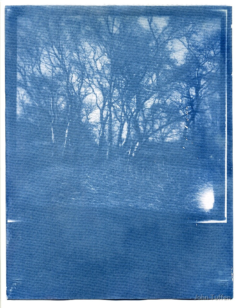 Cyanotype #1 by John Tuffen