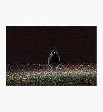 Bird - edit Photographic Print